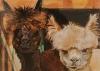 Izložba Marije Bojović u Galeriji ULUS